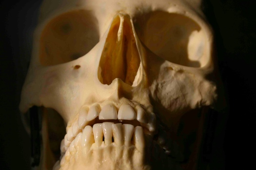 Photo of possibly Native American Skull
